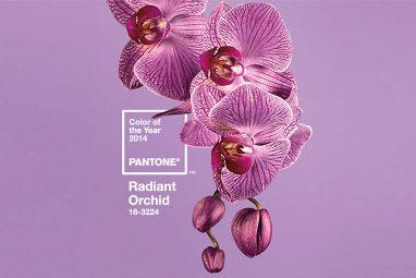 Freelance web designer branding - Radiant Orchid