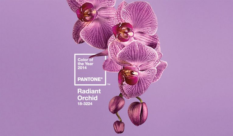 Radiant orchid - the orign of my branding