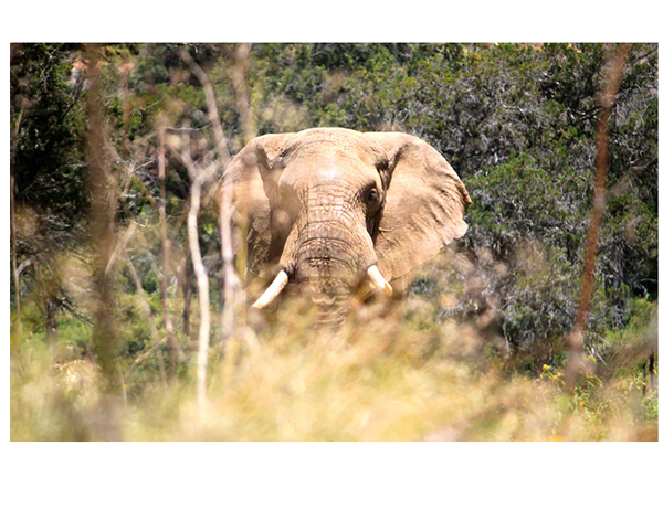 GoWild Africa with full screen background images
