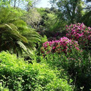 Carwinion Gardens