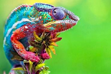 Brightly coloured lizard