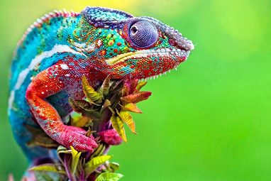 Brightly coloured lizard