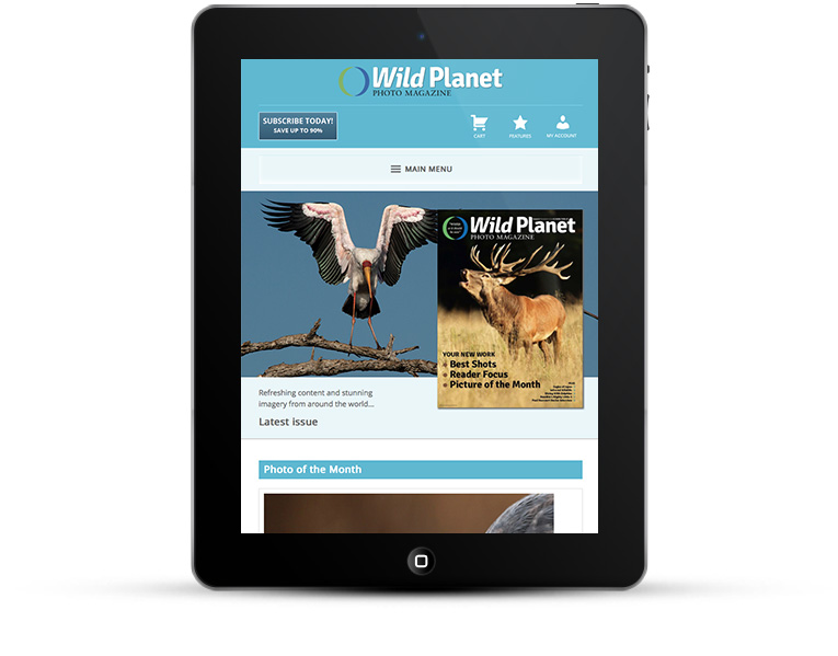 Mobile responsive design for photography magazine
