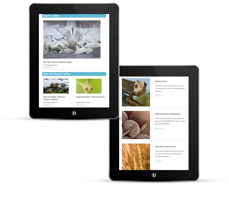 Mobile responsive web design iPads